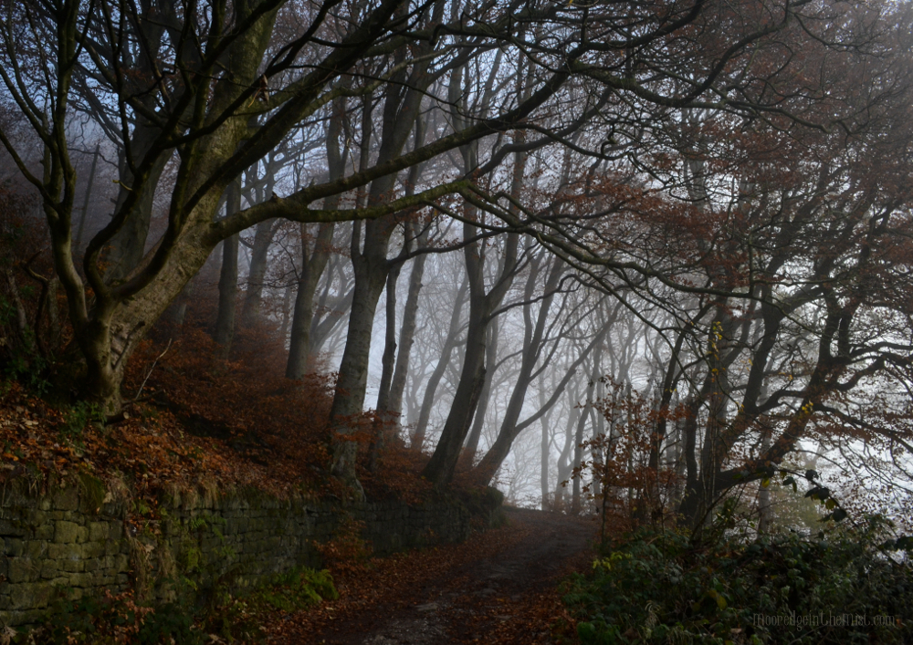 Autumn Woods, misty day © Bryony Whistlecraft | MooredgeintheMist.com