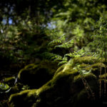 Into the Woods, moss and ferns © Bryony Whistlecraft | MooredgeintheMist.com