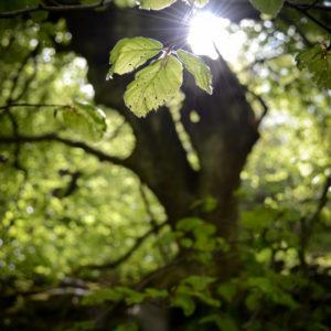 Leaf Light, spring sunshine © Bryony Whistlecraft | MooredgeintheMist.com
