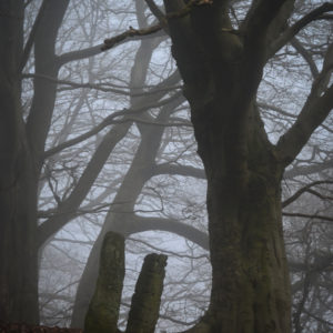 Misty Path, Autumn woodland with standing stones © Bryony Whistlecraft | MooredgeintheMist.com