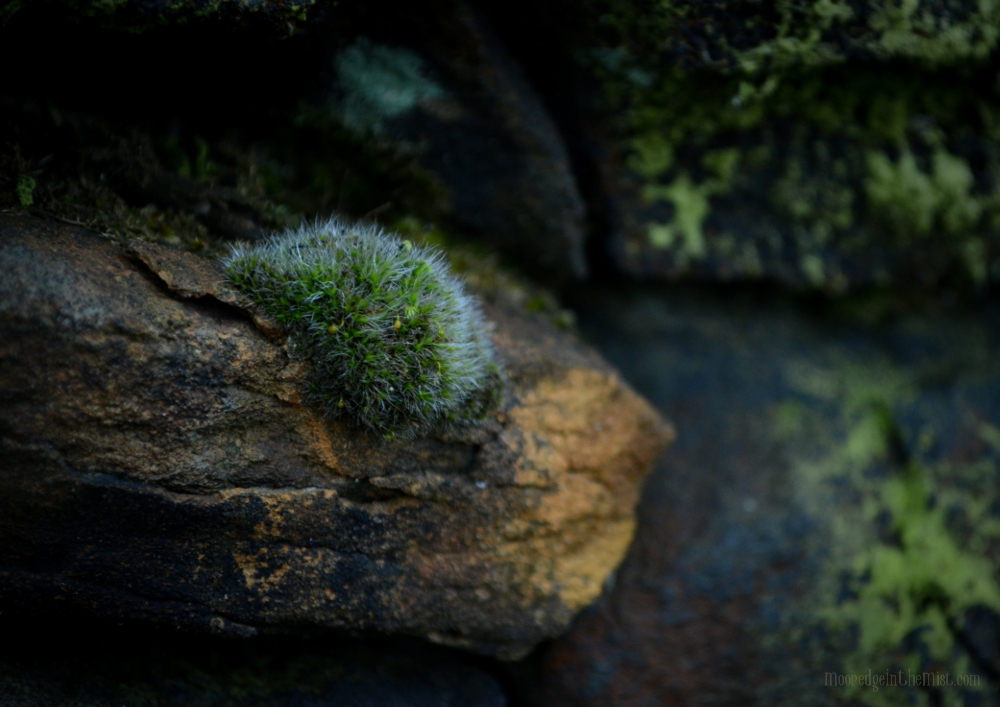 Mossy Rock, lichen and sandstone © Bryony Whistlecraft | MooredgeintheMist.com