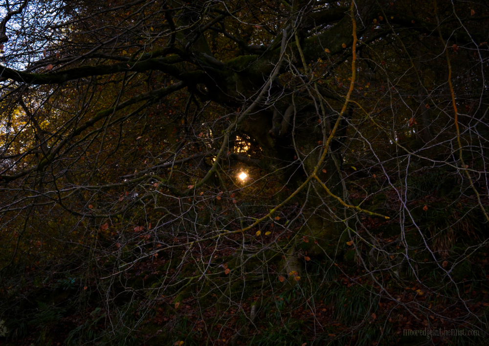 Tanglelight, autumn light through branches © Bryony Whistlecraft | MooredgeintheMist.com