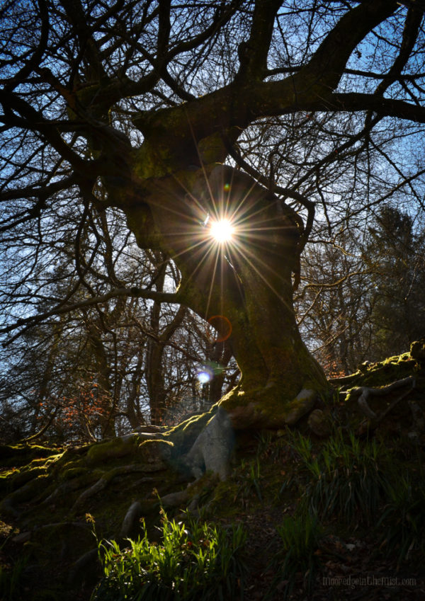 Tree Portal, sunlit faerie otherworld © Bryony Whistlecraft | MooredgeintheMist.com