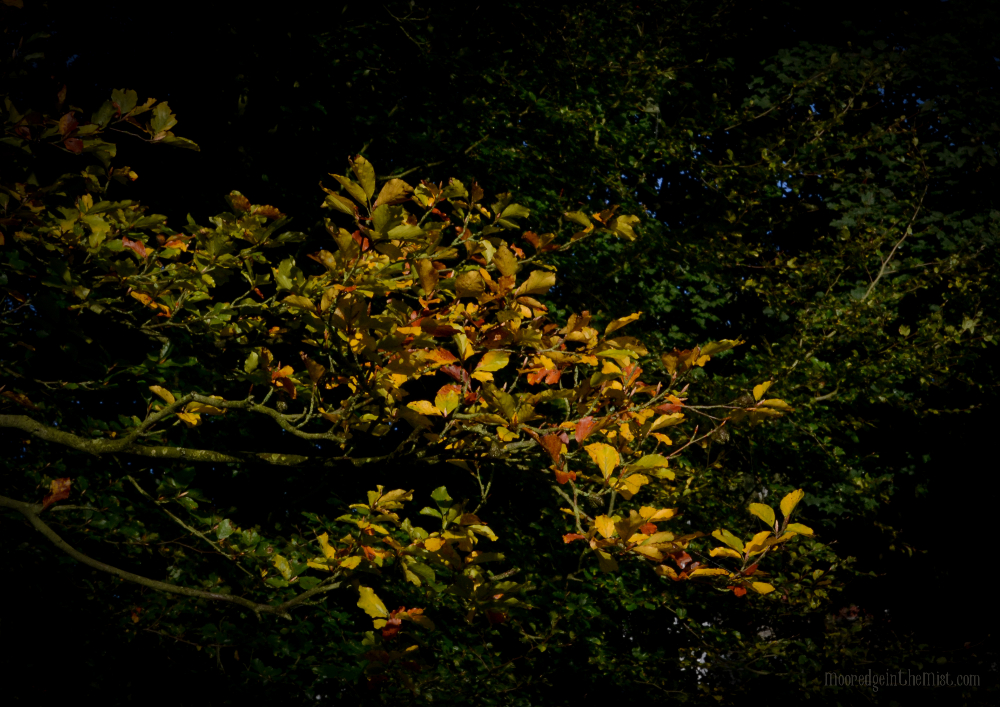 Autumn Equinox © Bryony Whistlecraft   MooredgeintheMist.com
