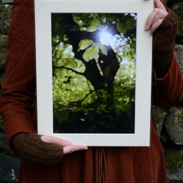 Leaf Light A4 Print, spring sunshine © Bryony Whistlecraft | MooredgeintheMist.com