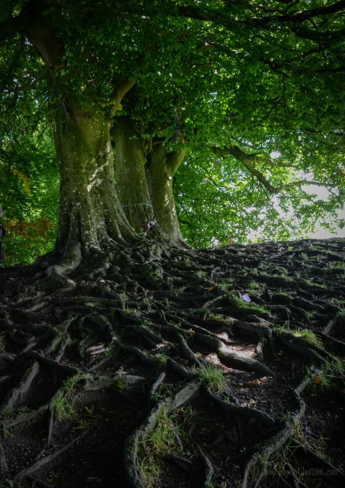 Avebury Wishing Trees, offerings at sacred site © Bryony Whistlecraft | MooredgeintheMist.com