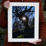Tree Portal A4 Print, sunlit faerie otherworld © Bryony Whistlecraft | MooredgeintheMist.com