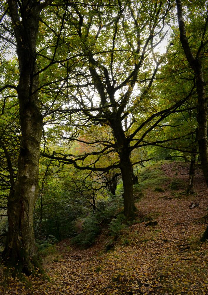 Cragg Vale, Autumn Woods © Bryony Whistlecraft   MooredgeintheMist.com