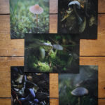 Mushroom Postcard Collection © Bryony Whistlecraft | MooredgeintheMist.com