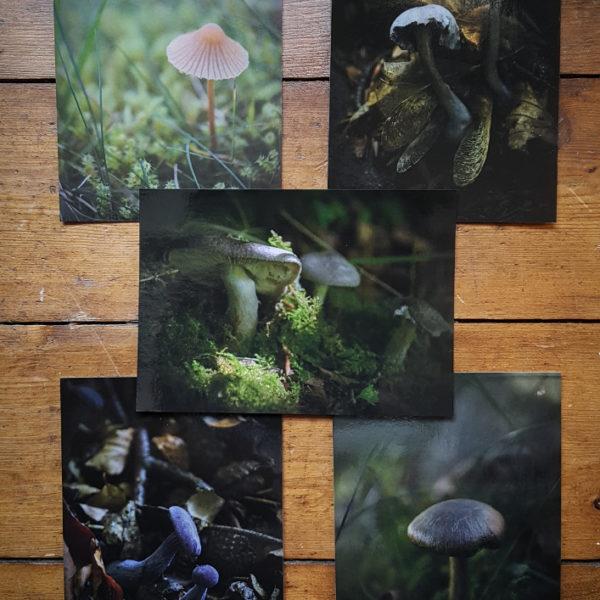 Mushroom Postcard Collection © Bryony Whistlecraft   MooredgeintheMist.com