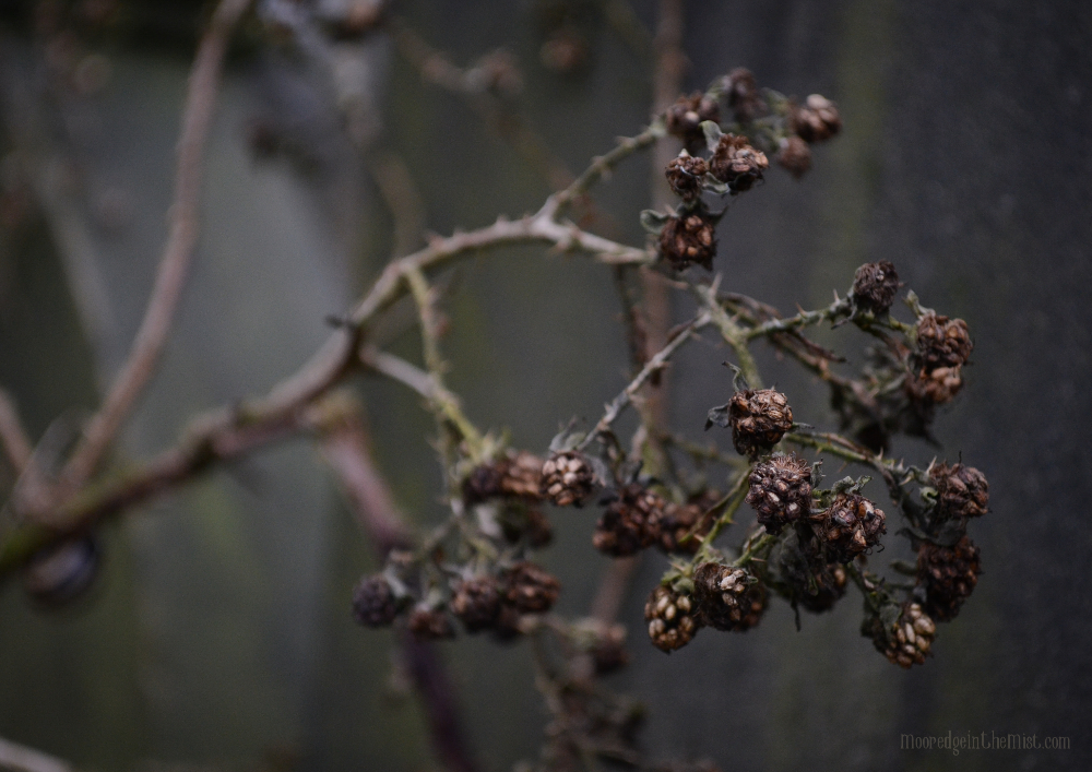 Cross Stone Cemetery, withered blackberries © Bryony Whistlecraft | MooredgeintheMist.com