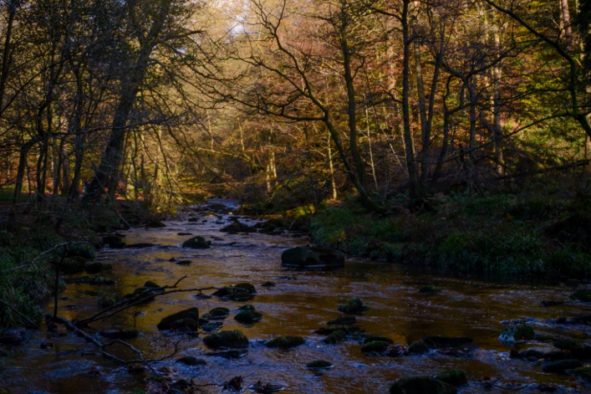 November Sun, Hardcastle Crags © Bryony Whistlecraft | MooredgeintheMist.com