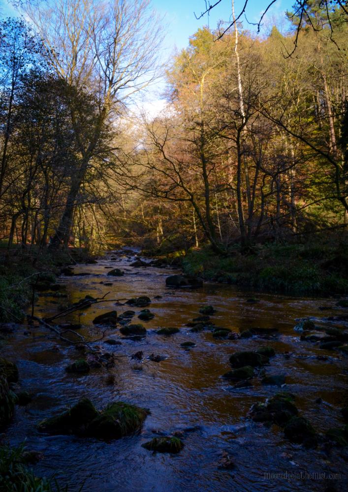 November Sun, Hardcastle Crags © Bryony Whistlecraft | MooredgeintheMist.com
