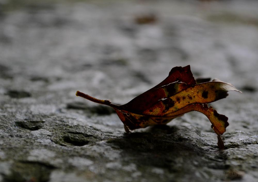 Autumn Offerings, fallen leaf © Bryony Whistlecraft   MooredgeintheMist.com