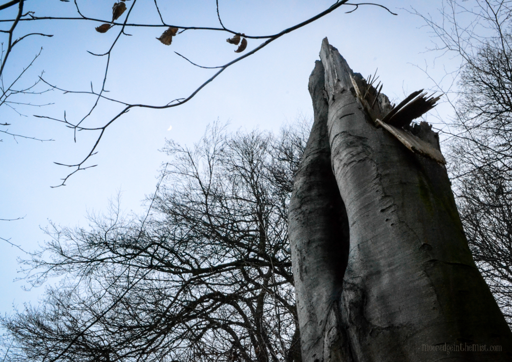 Fallen Tree, Crescent Moon © Bryony Whistlecraft   MooredgeintheMist.com