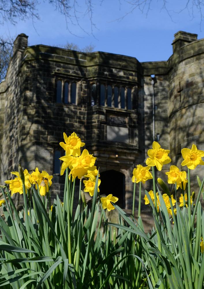 Spring Equinox, Skipton Castle Daffodils © Bryony Whistlecraft | MooredgeintheMist.com