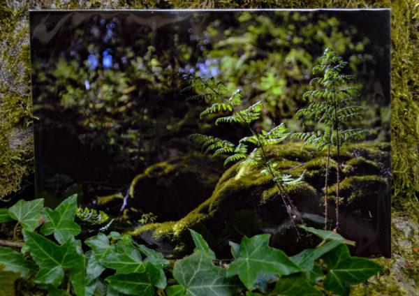 Into the Woods A5 Prints © Bryony Whistlecraft | MooredgeintheMist.com